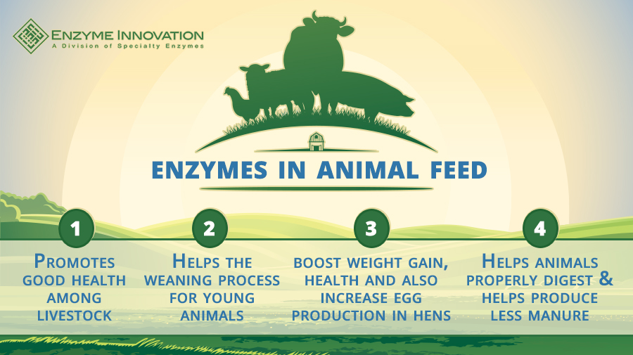 Benefits of Enzymes in Animal Feed