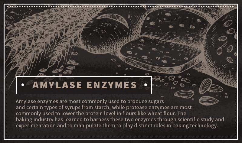 amylase enzymes quote